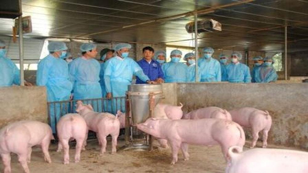Thành lập Ban chỉ đạo quốc gia phòng, chống dịch bệnh dịch tả lợn châu Phi